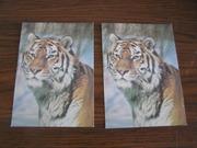 2 почтовые открытки Уссурийский тигр